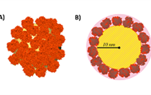 The corona of proteins adsorbed on silica nanoparticles reveals its structure