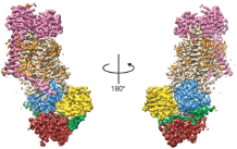 Lipid transmembrane transport: very first structures are revealed!